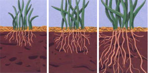 Liquid aeration roots