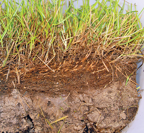 All about thatch lawn care simplified a safe and for What does soil
